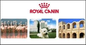 Concorso-Royal-Canin