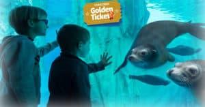 Concorso Golden Ticket