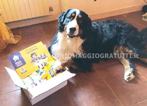 Pedigree Dentastix da testare gratis