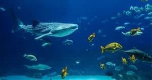 Concorso Vinci con ParkinGo e Shark - Il primo squalo