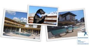 Concorso Vinci con Dog Days